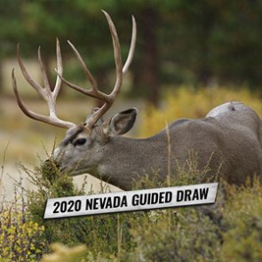 How to apply for Nevada's 2020 nonresident mule deer guided draw