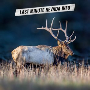 Alert: Proposed 2019-2020 Nevada Big Game Tag Quotas