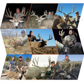 How to apply for Nevada's 2017 mule deer guided draw
