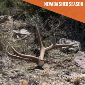Breaking: Nevada's new shed antler hunting restrictions