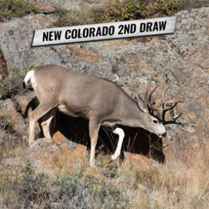 New for 2020: Colorado limited license