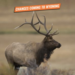 ALERT: New Wyoming bill introduced that impacts nonresident hunters