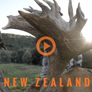 New Zealand — An International Adventure