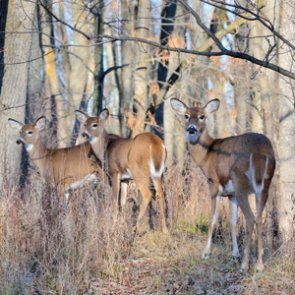 New CWD research may provide answers