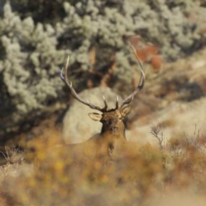 Big game harvest reporting extended in Oregon