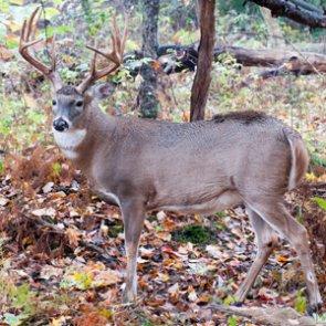 EHD kills 2,000 whitetail deer in eastern Oregon