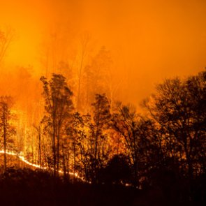 Proposed wildfire breaks detrimental to wildlife and habitat