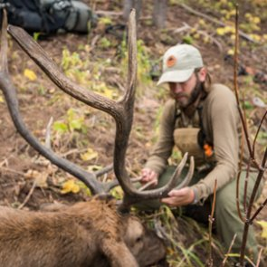 Overview of Colorado's elk hunting opportunities