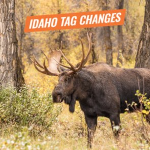 Proposed tag changes to moose, bighorn sheep and mountain goat hunts in Idaho for 2019/2020