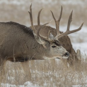 Top 10 days for a rut hunt