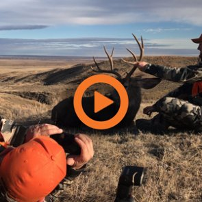 Montana Deer and Elk Application Strategy — Q&A Video