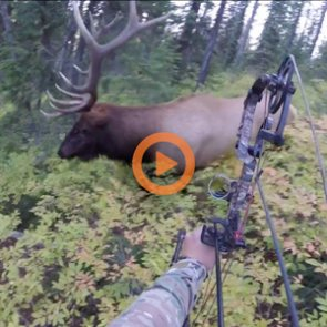 17 videos of the closest elk hunting encounters of all time