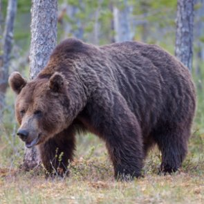 Approved grizzly killings leads to a lawsuit