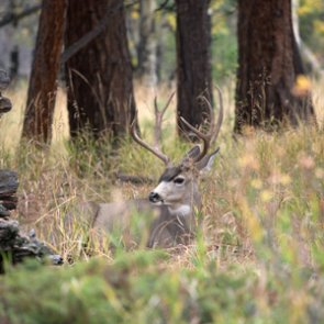South Dakota proposes carcass transportation change due to CWD
