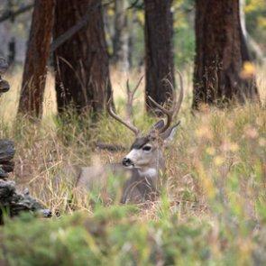 South Dakota proposes carcass transportation change due to CWD