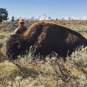 A little help from lady luck on a bison hunt