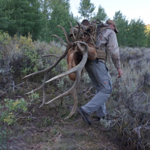Elk lessons from the Jarbidge