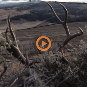 TEPID — A Colorado 3rd Season Mule Deer Hunt