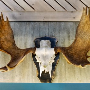 Taxidermist sued by Minnesota co-op creditors