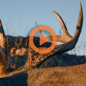 The 8 best Coues deer hunting films
