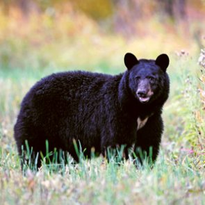Utah allows hunters to turn back spring bear and turkey permits due to COVID-19