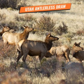 Information on the 2020 Utah antlerless draw