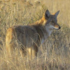 Utah hunters & predator control