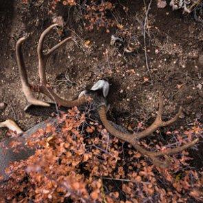 Applying for Utah's Dedicated Hunter deer permit program
