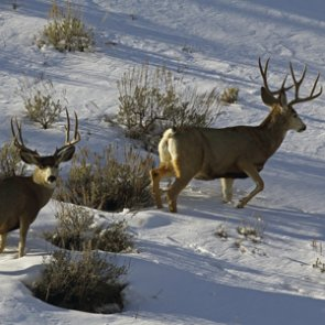 New Utah extended hunt changes for 2015