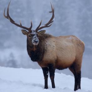 More than 1,000 poaching cases each year in Utah