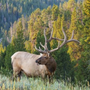 Wyoming's new regulation will help monitor CWD