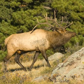New Mexico bill makes poaching a felony