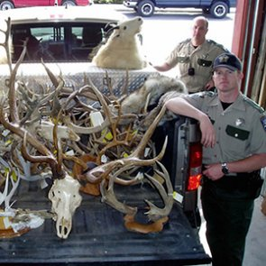 5 big-time poaching cases
