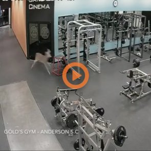Whitetail buck crashes into gym for a workout