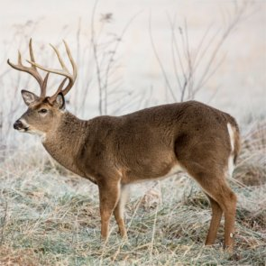 CWD found near Yellowstone