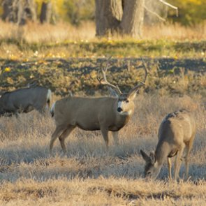 Public supports Wyoming wildlife crossings
