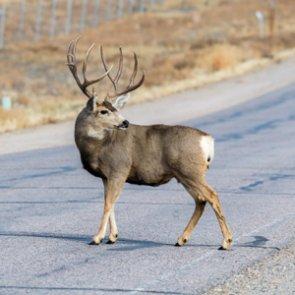 Wyoming roadkill bill passes state Senate
