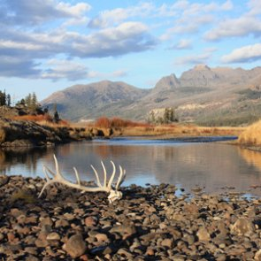 Wyoming public lands shed hunting opens at noon on May 1