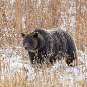 Alaska wildlife management differs at state and park levels
