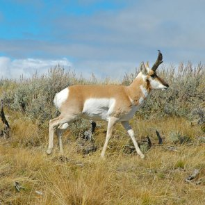 Las Vegas poacher caught red-handed
