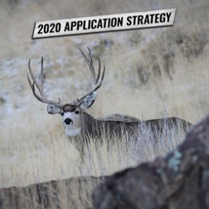 APPLICATION STRATEGY 2020: Arizona Deer, Sheep and Bison