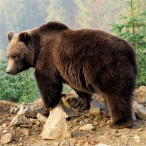 Montana hunters: get ready for grizzlies
