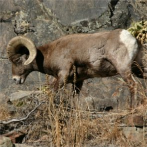 Grazing change for Beaverhead-Deerlodge National Forest?
