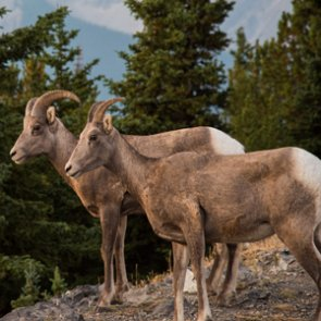 Colorado plans prescribed burn for East Vail