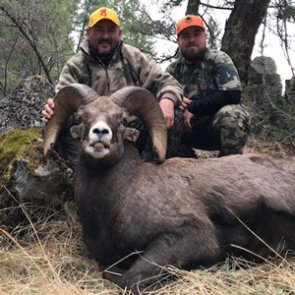 Once and a lifetime DIY Montana sheep hunt