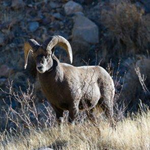 Wyoming veteran gets hunt of a lifetime