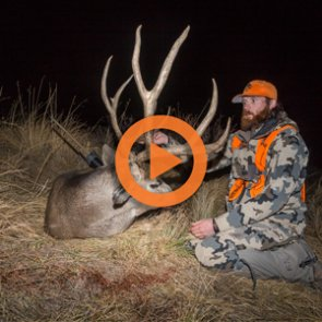 Colorado Deer and Elk Application Strategy — Q&A Video