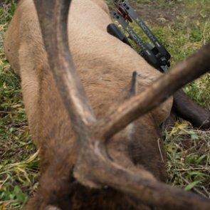 Stalking elk 101