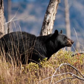 Bear that attacked Colorado teen has been killed