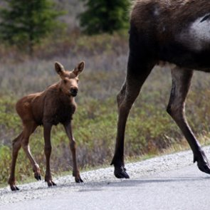 Colorado asks the public to steer clear of wildlife